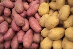 Poatoes of two varieties at he marketplace. Yellow, softer potatoes are great for baking or smashing. The red, more consistent potatoes are great for French stock photography