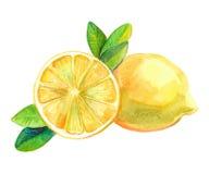 Yellow sour lemon. Citrus leaves. watercolor fruit Stock Photography