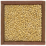 Yellow soy beans royalty free stock photo