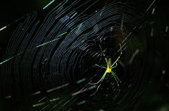 Yellow spider and cobweb rim light. Yellow spider and gossamer rim light wonderful insect in darkness Stock Photos