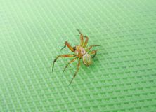 Yellow spider on green background Royalty Free Stock Photography