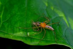 Yellow spider on the leaves Stock Images