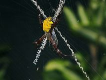 Yellow Spider in the Nest Royalty Free Stock Images
