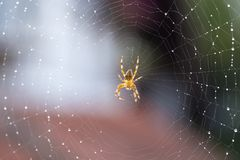 Spider on web stock photography