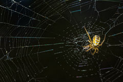 Yellow spider webs in the middle Royalty Free Stock Photography
