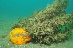 Yellow sponge Royalty Free Stock Images