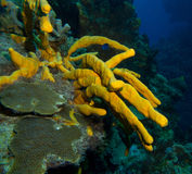 Yellow sponge royalty free stock photography