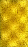 Yellow sponge texture Stock Image