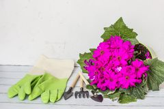 Yellow spray bottle, rubber gloves, garden instrument, blooming flower purple color. Gardening, planting and people concept royalty free stock images