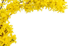 Yellow spring blossoms border Stock Image