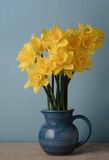Yellow Spring Daffodils in Blue Jug on Table Royalty Free Stock Images