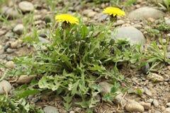 Yellow spring Stock Image