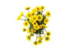 Yellow spring flower Royalty Free Stock Photos