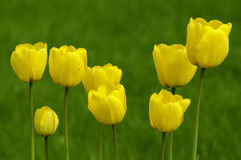 Yellow spring flowers stock images