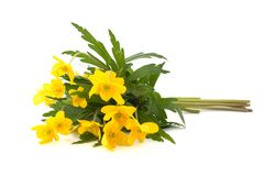 Yellow spring flowers - 2. Yellow spring flowers on white (2 Royalty Free Stock Images