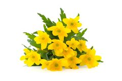 Yellow spring flowers. On white Royalty Free Stock Photography