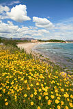 Yellow spring flowers on beach Stock Photography