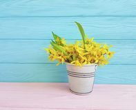 Yellow spring flowers easter rustic vintage border seasonal on blue wooden background. Yellow spring flowers blue wooden background seasonal border vintage stock images