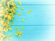 Yellow spring flowers border seasonal on blue wooden background. Yellow spring flowers blue wooden background seasonal border royalty free stock photos