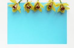 Yellow spring flowers colorful blue background