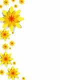 Yellow Spring Flowers. Creative Abstract Decorative Yellow Spring Flowers Background vector illustration Royalty Free Stock Photo