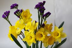 Yellow spring flowers easter holiday narcisus Royalty Free Stock Images