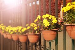 Yellow spring flowers on a fence in the city Stock Images