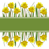 Yellow spring flowers and grass Stock Photo
