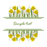 Yellow spring flowers and grass Royalty Free Stock Photo