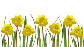 Yellow spring flowers and grass Royalty Free Stock Photography