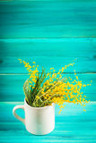Yellow spring flowers of mimosa in a white mug on a blue wooden background. Royalty Free Stock Photography