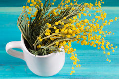 Yellow spring flowers of mimosa in a white mug on a blue wooden background. Stock Image