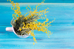 Yellow spring flowers of mimosa in a white mug on a blue wooden background. Stock Photo