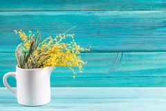 Yellow spring flowers of mimosa in a white mug on a blue wooden background. Royalty Free Stock Photo