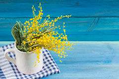Yellow spring flowers of mimosa in a white mug on a blue wooden background. Stock Images