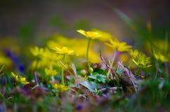 Yellow spring flowers. Nature detail macro bokeh wallpaper stock images