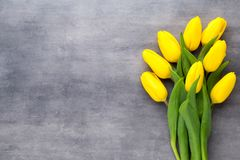 Yellow spring flowers, tulip on a gray background. Yellow spring flowers, tulip on a gray background Royalty Free Stock Photography