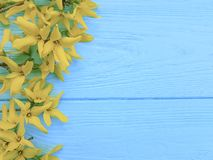 Yellow spring flowers vintage border seasonal on blue wooden background. Yellow spring flowers blue wooden background seasonal border vintage royalty free stock images