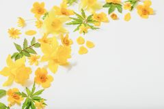 Yellow  flowers on white background. Yellow spring flowers on white background stock photo