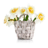 Yellow spring flowers in wicker basket Stock Photos