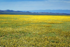 Yellow spring steppe Royalty Free Stock Photos