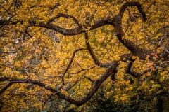 Yellow spring tree Royalty Free Stock Photos