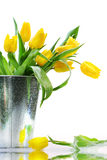 Yellow spring tulips Stock Images