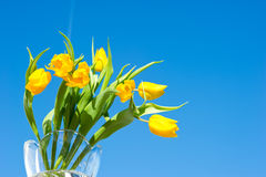 Yellow spring tulips over blue sky Stock Photo