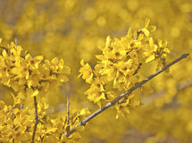 Yellow on Springtime Yellow Stock Images
