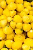Yellow squash on display Stock Image
