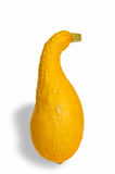 Yellow Squash Royalty Free Stock Images