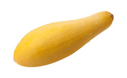 Yellow Squash Isolated with clipping path. On a white background Royalty Free Stock Photos