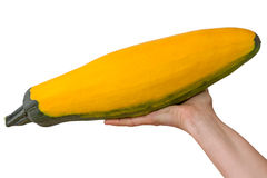 Yellow squash in the palm of the hand Stock Images
