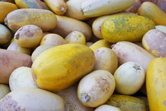 Yellow squashes Royalty Free Stock Images